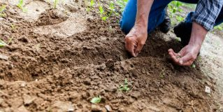 How to Make Your Own Garden at Home