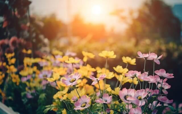 light plants